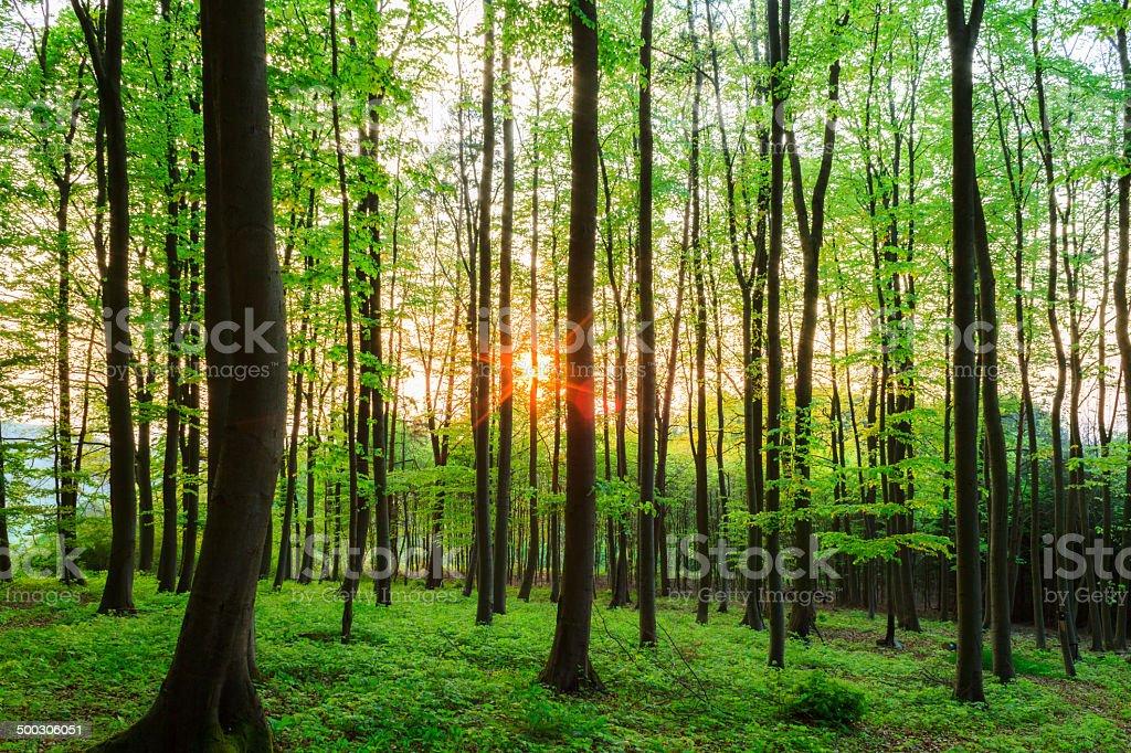 Loverly Sonnenuntergang Lizenzfreies stock-foto