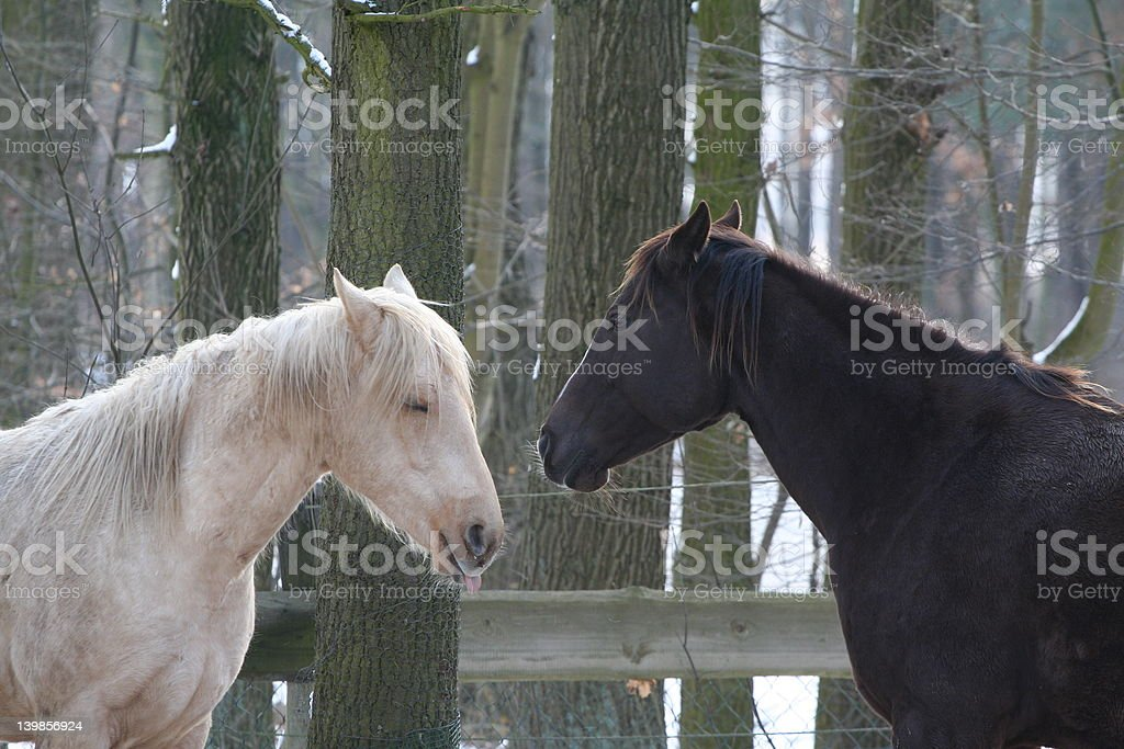 2 lovers royalty-free stock photo