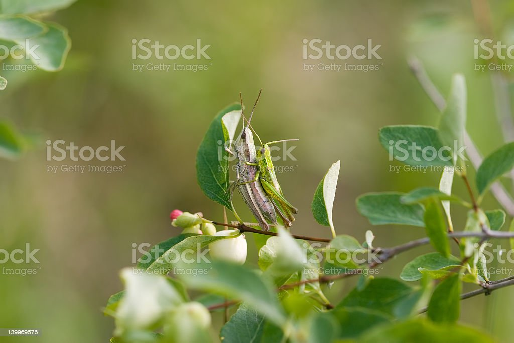 Lovers royalty-free stock photo