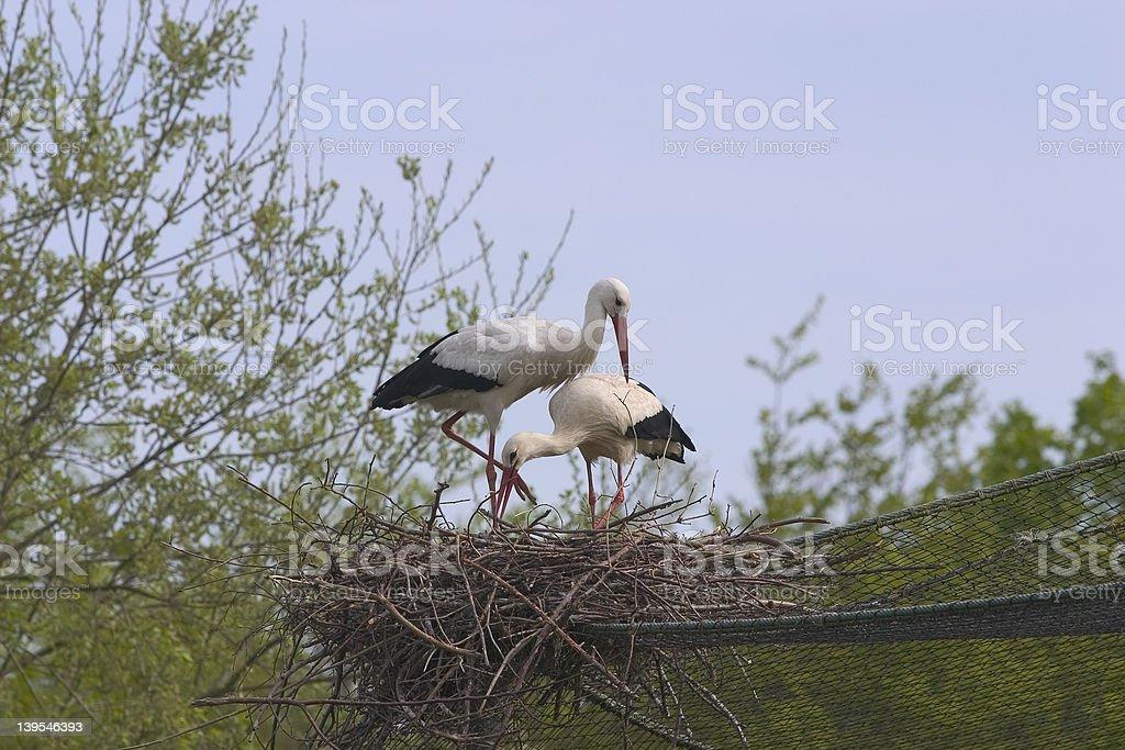 Loving stork couple royalty-free stock photo