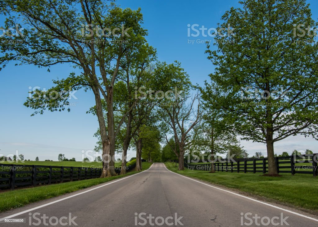 Low Angle of Country Road Lined with Black Fences stock photo
