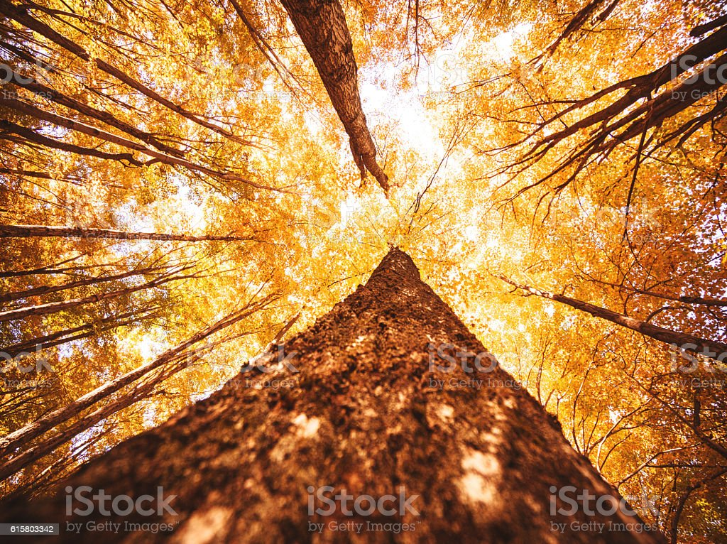 low angle view of an autumn tree in new england stock photo