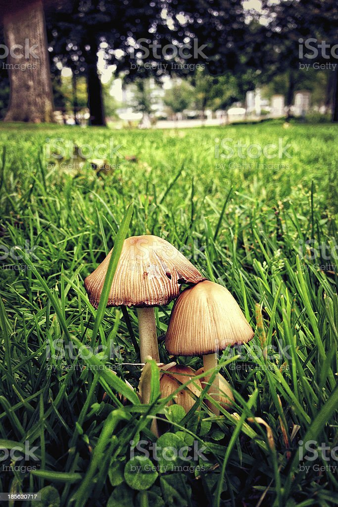Low angle view of mushrooms stock photo