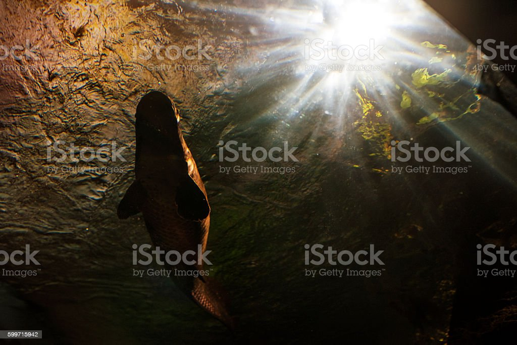 low angle view of pike stock photo