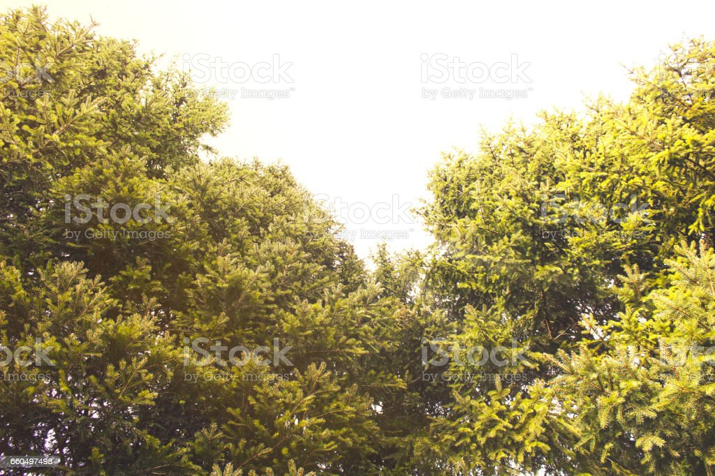 Low Angle View Of Trees In Forest stock photo