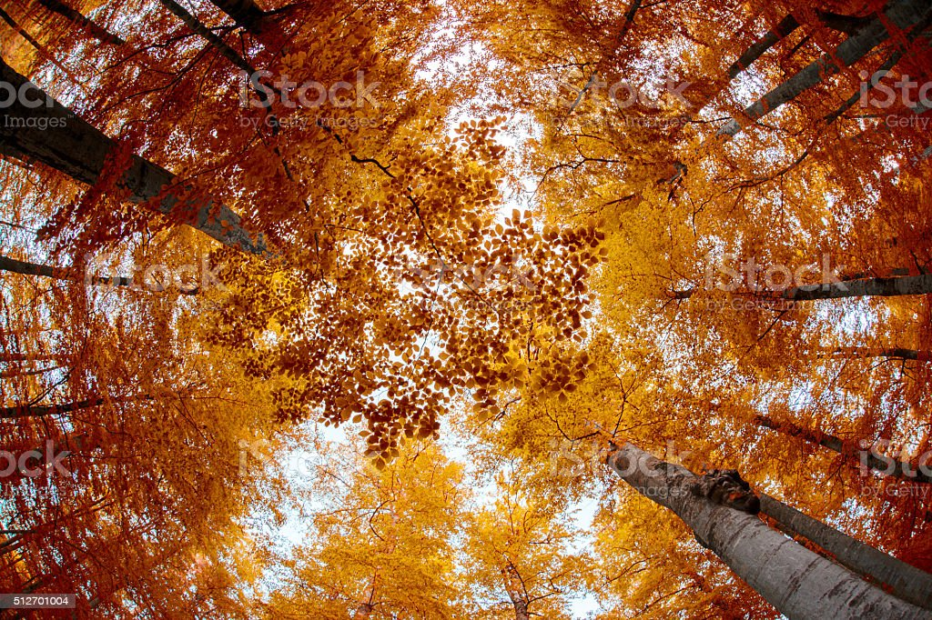 Low Angle View Trees stock photo
