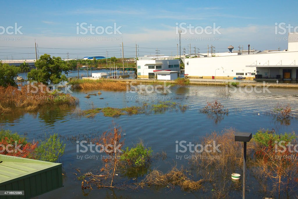 A low density place in water flood, plants are mostly soaked royalty-free stock photo