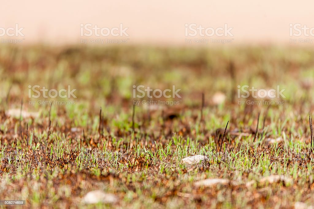 Low Growth stock photo