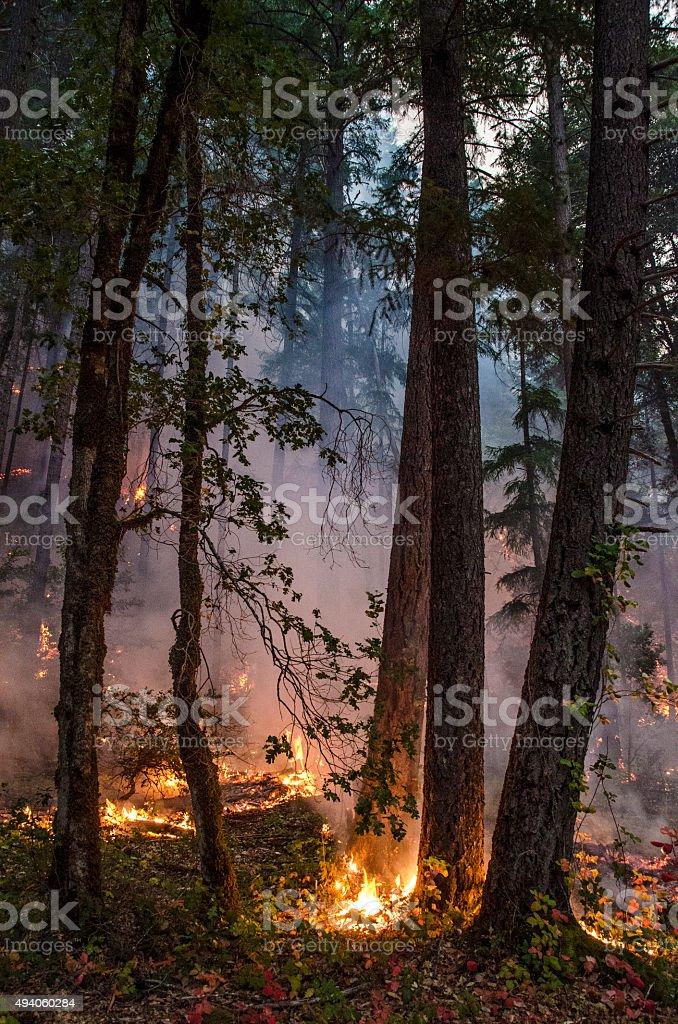 Low intesity fire stock photo