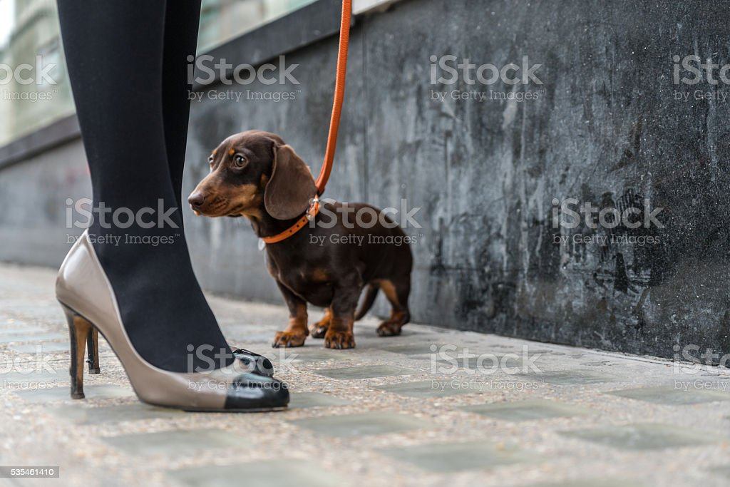 Low section of woman with dachshund on footpath stock photo