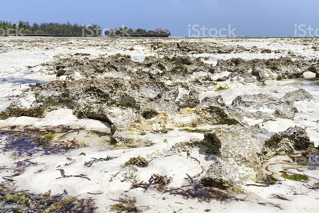 Low tide and Village of fishermen in Zanzibar stock photo