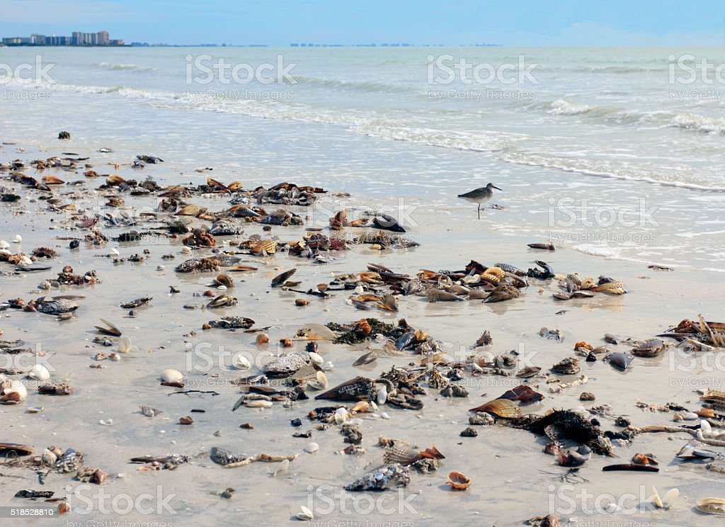Low Tide at Fort Myers Beach, Florida stock photo