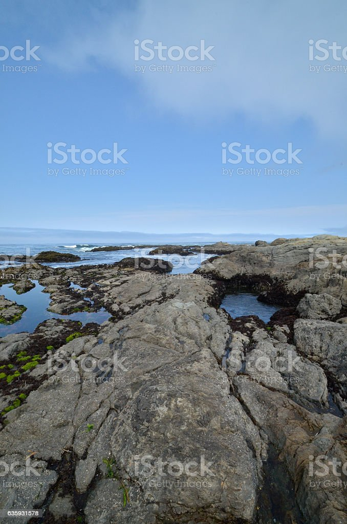 Low tide exposed rocks stock photo