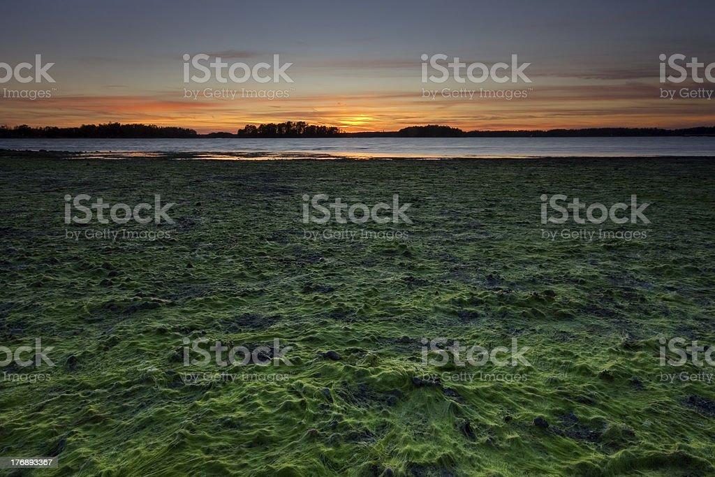 Low tide in sea coast royalty-free stock photo