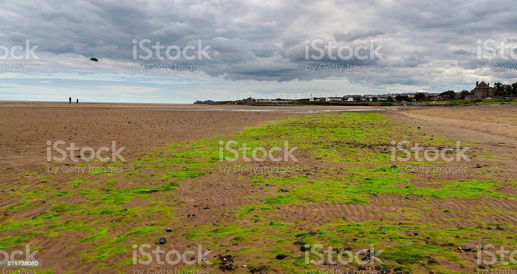 Low tide in the ocean with seaweed stock photo