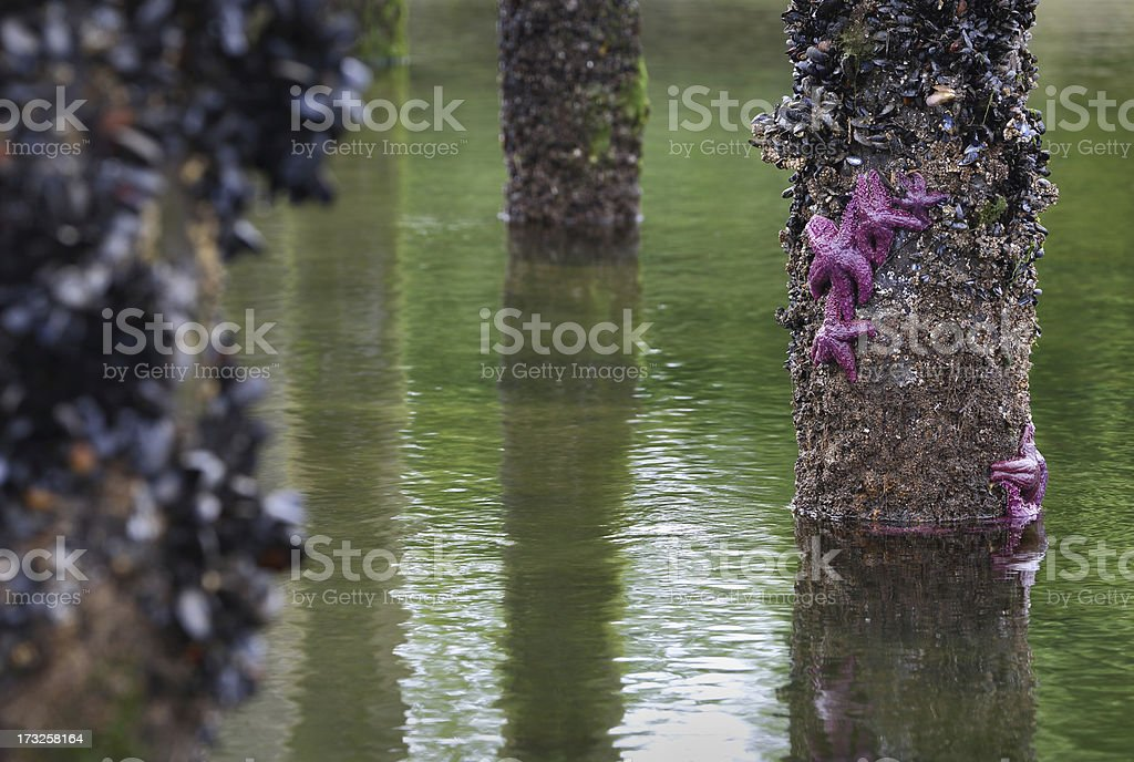 Low Tide Pier royalty-free stock photo