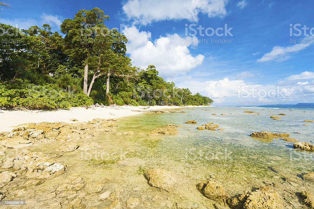 Low Tide Rocks Pristine Untouched Beach Forest royalty-free stock photo