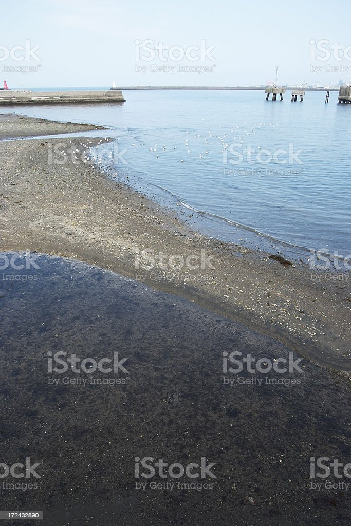 Low tide with seagulls royalty-free stock photo