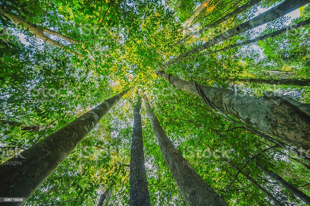Low-angle shot of tree forest stock photo