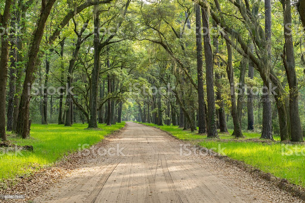 Lowcountry Dirt Road with Live Oaks and Spanish Moss royalty-free stock photo