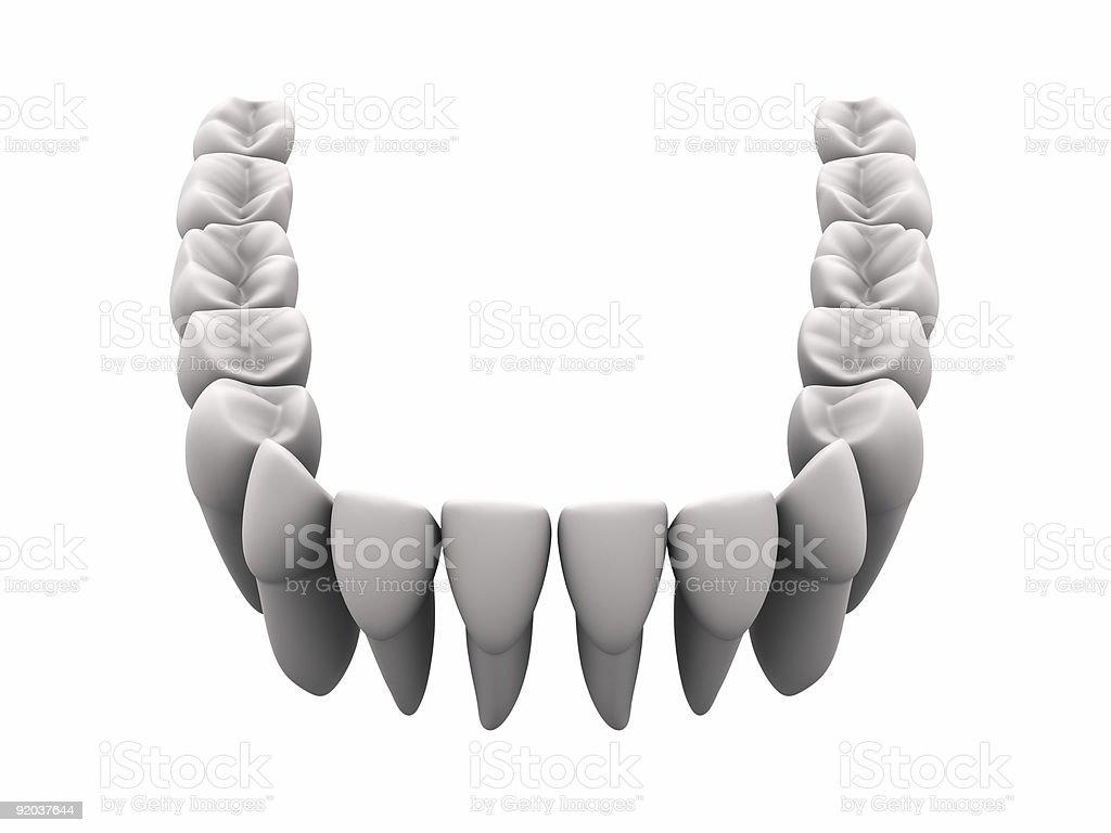 Lower teeth 1 royalty-free stock photo