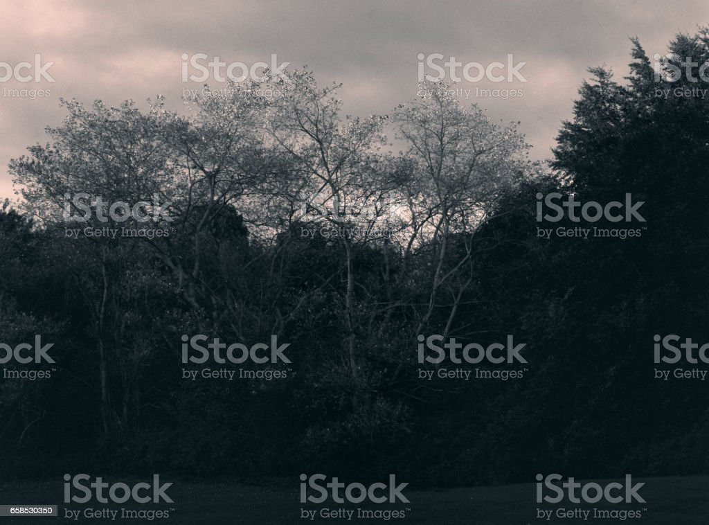 Low-key woods at the evening stock photo
