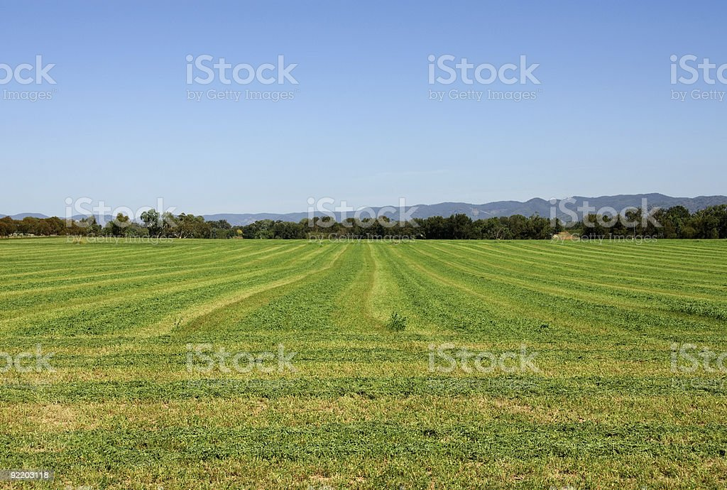 Lucerne Field royalty-free stock photo