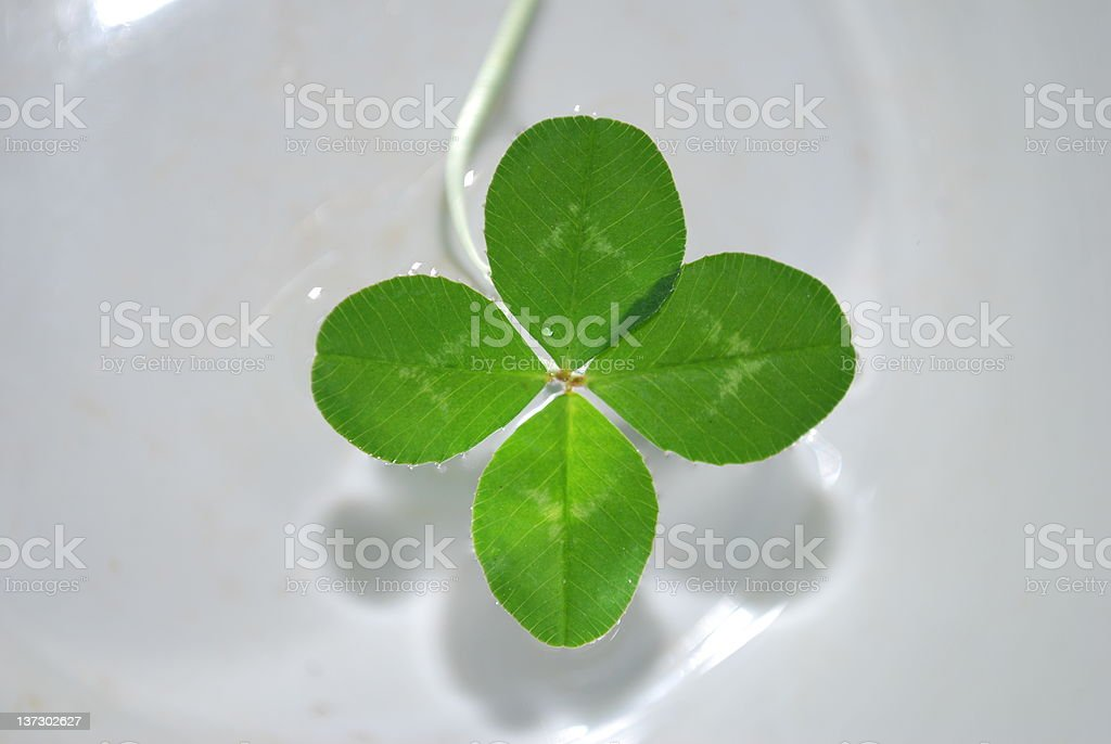 Luck and Four leafed Clovers. stock photo