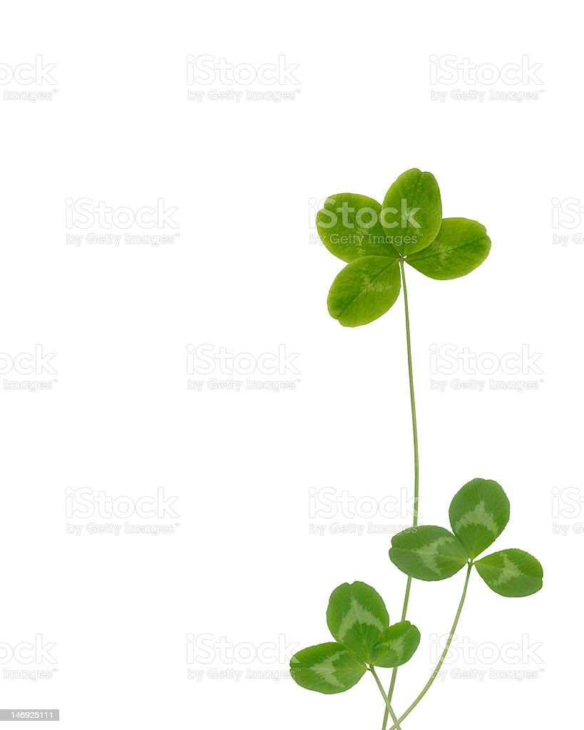 lucky clover royalty-free stock photo