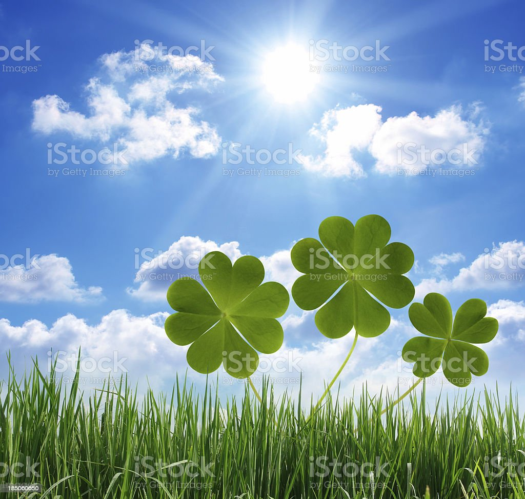 Lucky clovers and grass stock photo