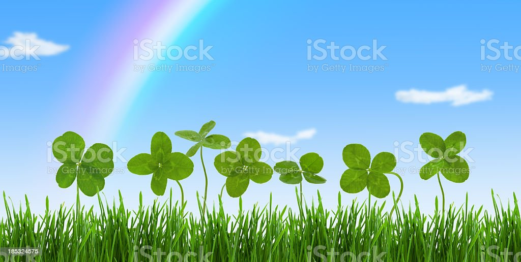 Lucky Clovers. stock photo