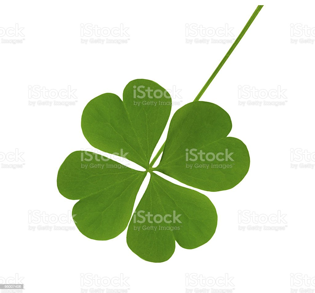 Lucky Shamrock stock photo