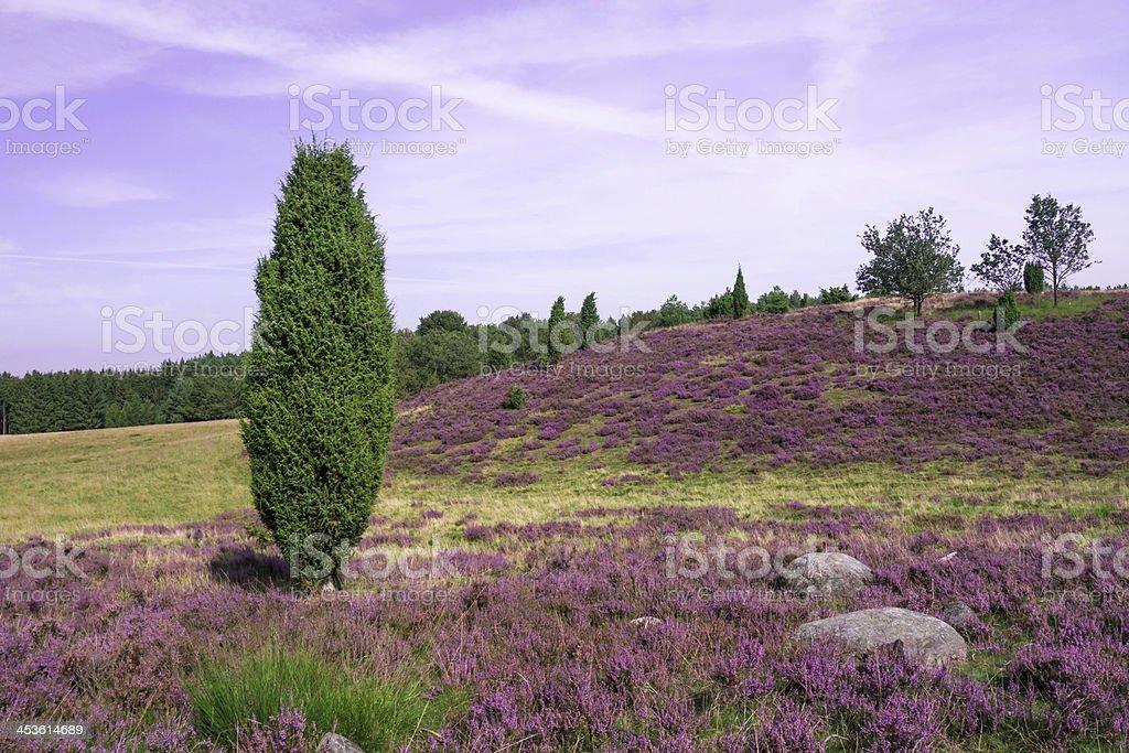 Lueneburg Heath stock photo