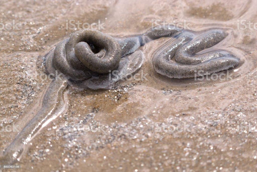 Lugworm cast on wet sand stock photo