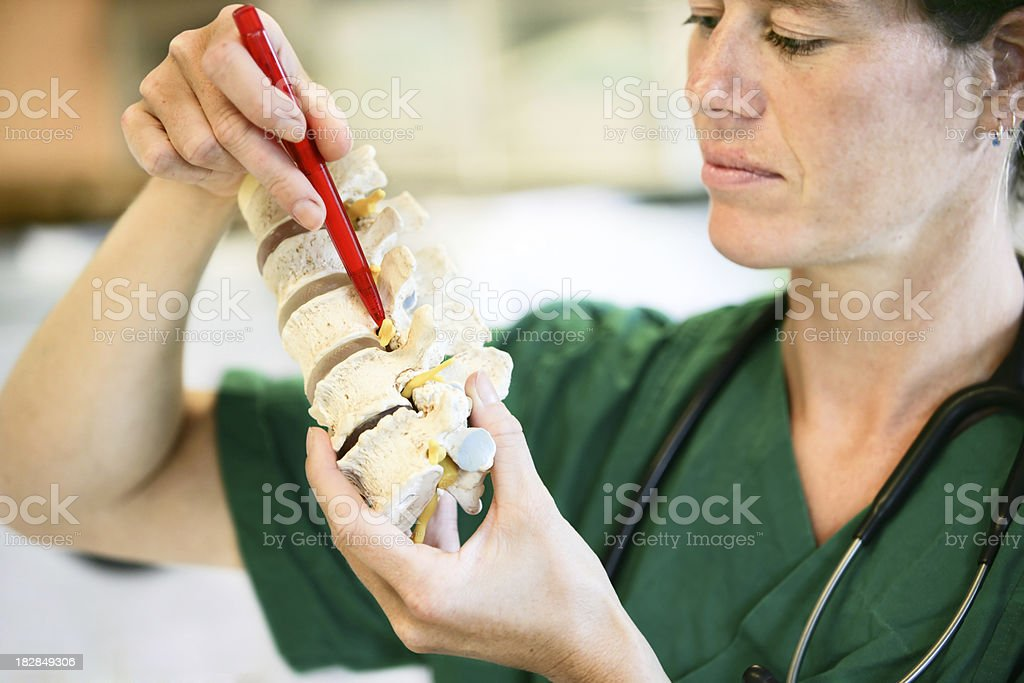 Lumbal spine stock photo