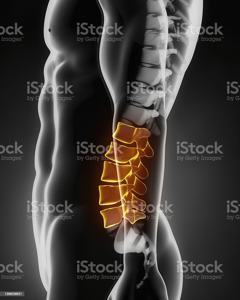 Lumbar spine anatomy lateral view stock photo
