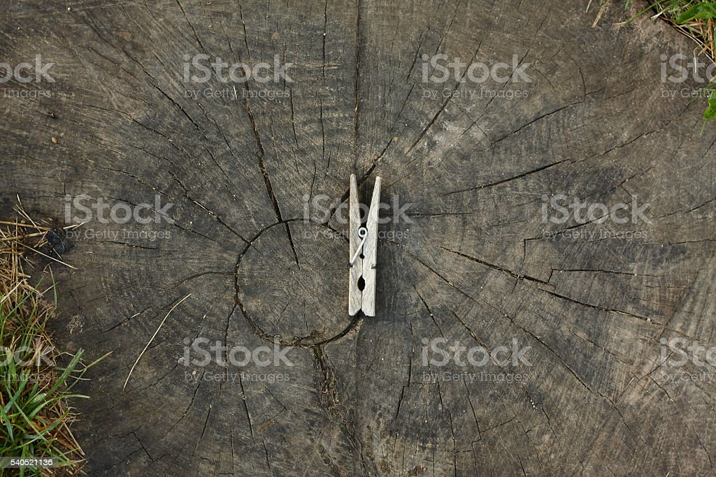 lumber clothespeg clothespin on old tree cut stock photo