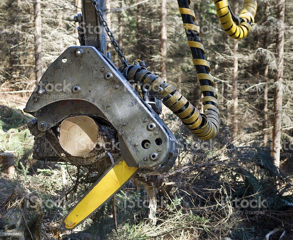 Lumber industry - harvesting stock photo