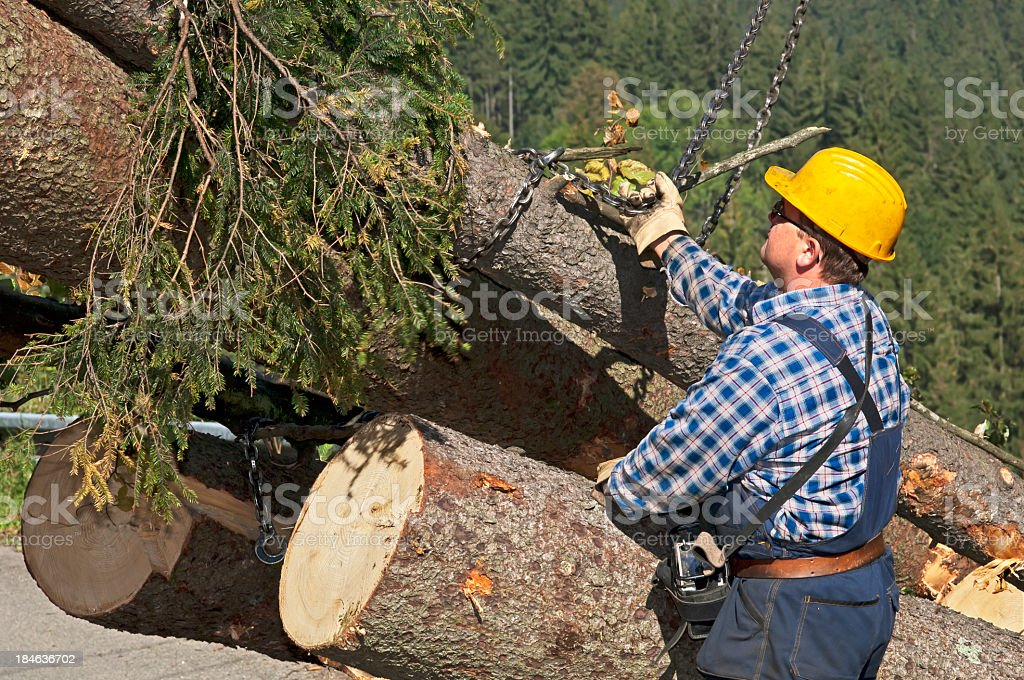 Lumber industry - harvesting system stock photo