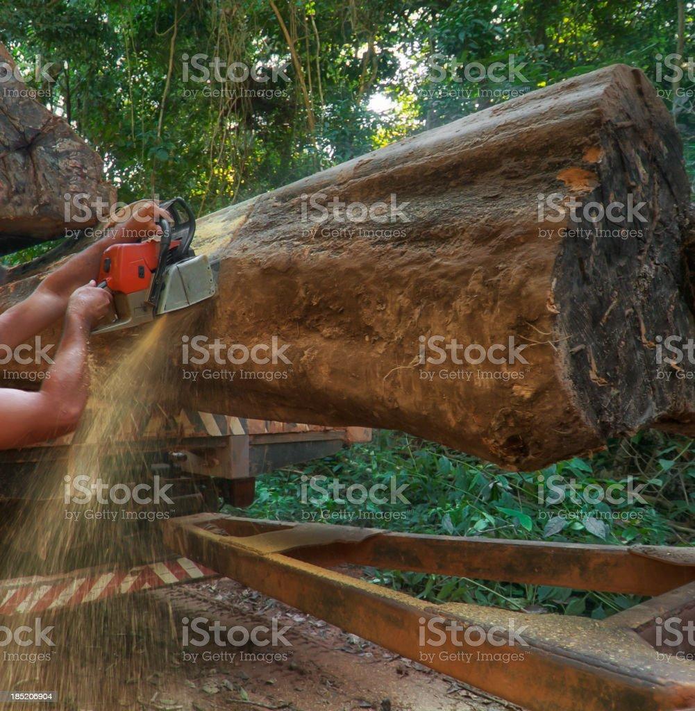 Lumber industry in the amazon stock photo