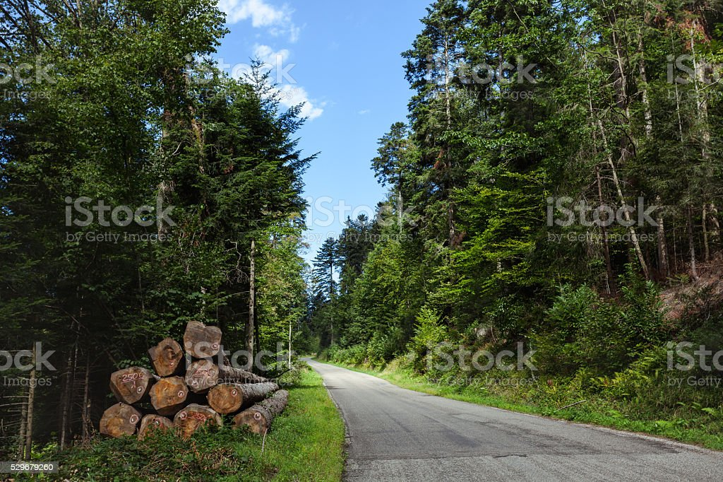 Lumber industry, logs in forest stock photo