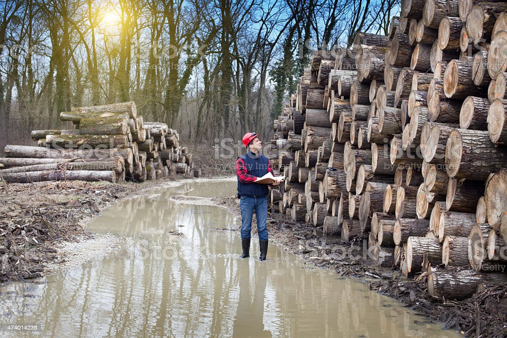 Lumber industry stock photo