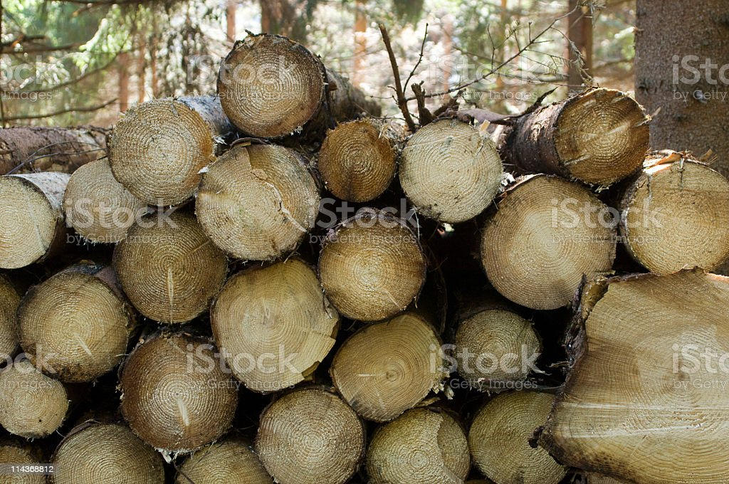 Lumber industry - yard of timber in forest stock photo