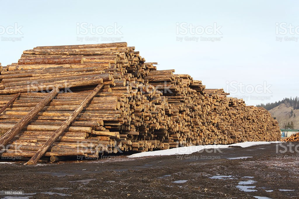 Lumber Mill Log Pile royalty-free stock photo
