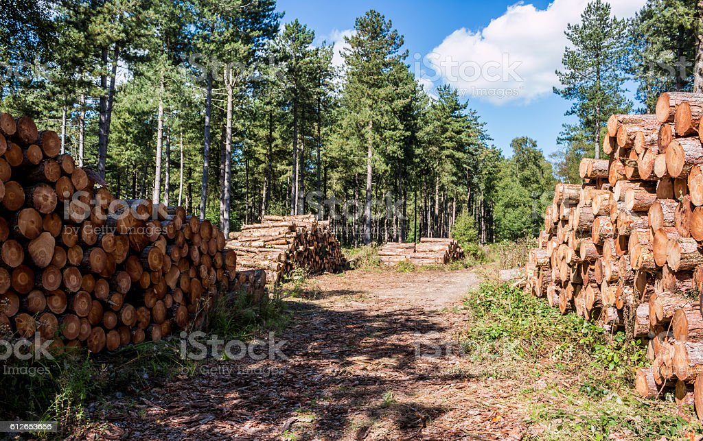 Lumber wood stock photo