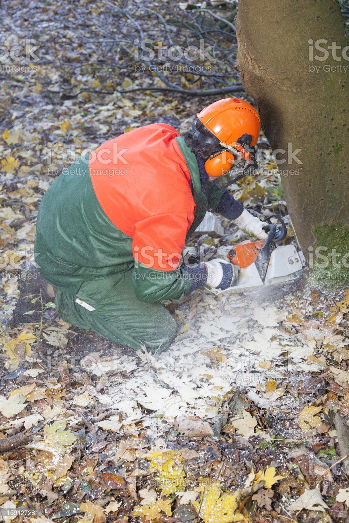 lumberjack at work royalty-free stock photo