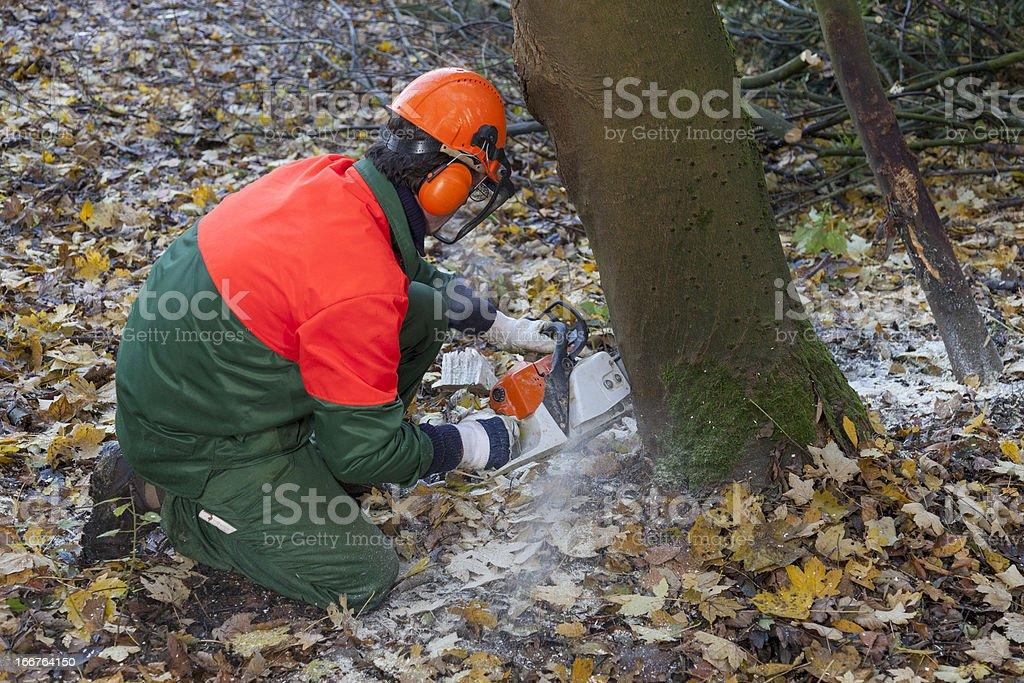 lumberjack at work royalty-free stock photo