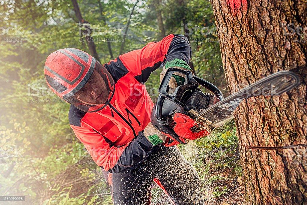 Lumberjack at work stock photo