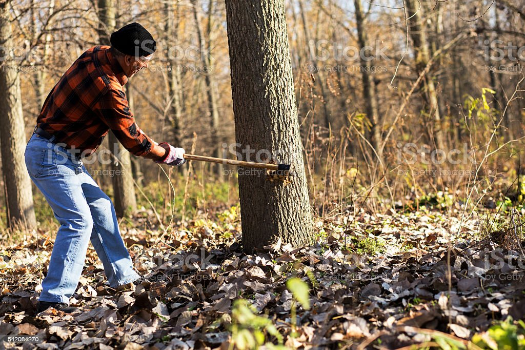 Lumberjack cutting tree with axe stock photo
