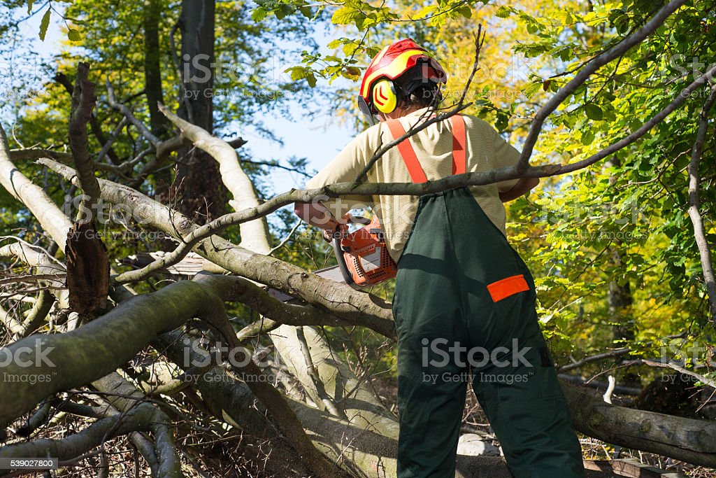 Lumberkack fighting against coppice stock photo